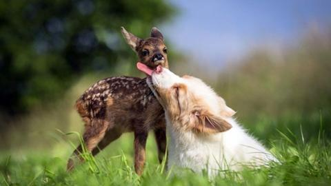 This Dog And Fawn Have The Most Beautiful Relationship