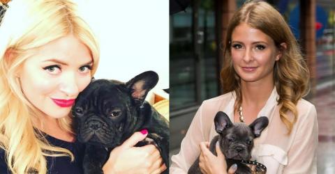 More And More French Bulldogs Are Being Abandoned - Should This Breed Be Outlawed?