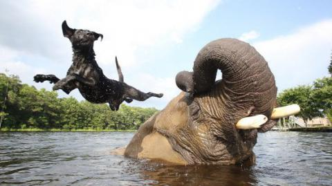 They Said It Would Never Work... But This Dog And Elephant Are Inseparable