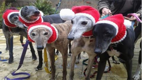 This Woman Knits Jumpers For Greyhounds So They Can Have The Best Christmas