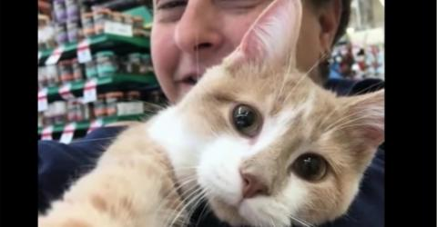 When This Cat Realises He's Finally Been Adopted, He Reacts In The Most Beautiful Way