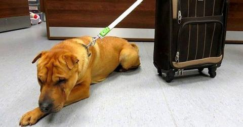 He Was Abandoned At A Train Station With A Suitcase Containing Six Items