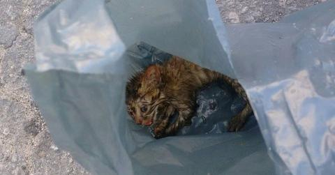 She Found An Abandoned Kitten In A Plastic Bag... But She Couldn't Believe Her Eyes When They Got Home