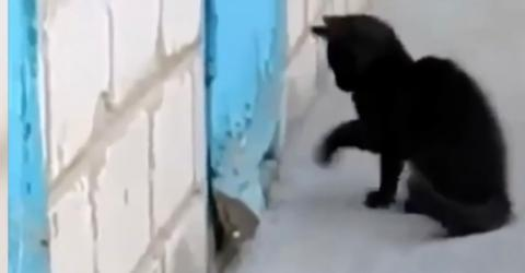 A Kitten Was Scratching Nervously At A Door. You Won't Believe What Was Hidden Behind It!