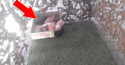 He Found 6 Beautiful Kittens Alone In A Garden Then Something Magical Happened