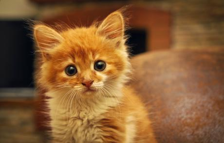 10 Useful Tips On How To Welcome A New Kitten Into Your Home The Right Way