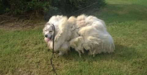They Found This Abandoned Dog With Something Horrifying In His Fur