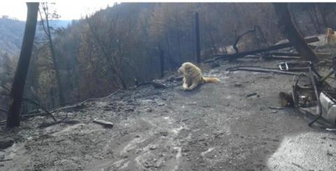 This Dog Was Left Behind In The California Fires - Then She Did Something Incredible