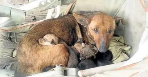 She Was Protecting Her Puppies From The Cold, But What They Found With Her Left Them Amazed