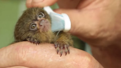 This May Officially Be The World's Cutest Animal - And The Internet's Fallen In Love With Her