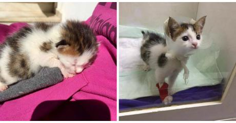 She Rescued A Kitten From A Skip But When She Took Him To The Vet He Couldn't Believe His Eyes