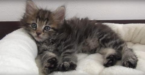 When She Adopted This Adorable Kitten, She Had No Idea He'd Turn Out Like This