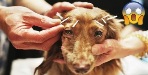 You Can Now Get Acupuncture For Pets - And People Are Outraged