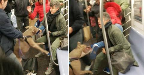 Pitbull Savagely Attacks Woman While Riding The New York Subway