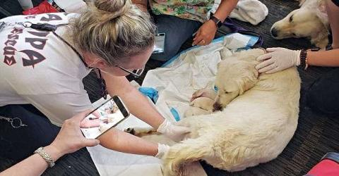 Heartwarming Moment This Service Dog Gave Birth In A Busy Airport