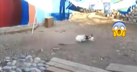 These Rabbits Were Fighting But You'll Never Believe Who Stepped In To Stop Them