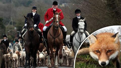 This Is How Fox Hunting Continues In The UK, Despite The Ban