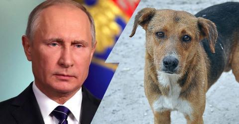 World Cup 2018: Putin's Cruel Attack On Animals!