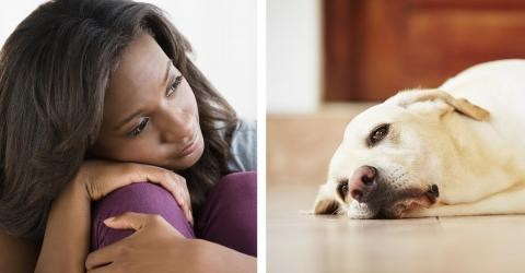Looking After A Sick Pet Could Be Seriously Endangering Your Health