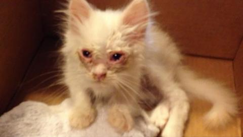 Weeks After His Rescue, This Stray Kitten's Transformation Is Incredible