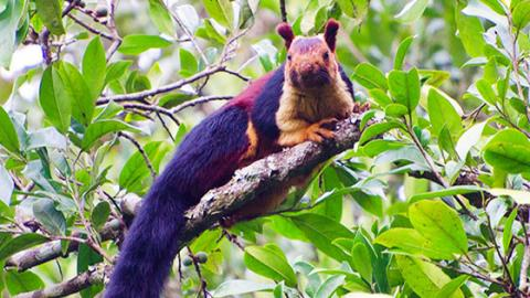 In India, Squirrels Are Not Red Or Grey - They're Rainbow-Coloured!