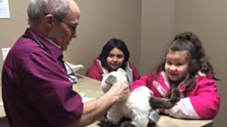 This Vet Agreed To Take Care Of A Little Girl's Stuffed Cat For A Very Special Reason
