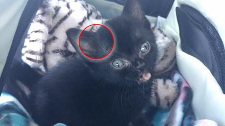 Suffering From A Rare Disease, This Kitten Was Saved By A True Hero