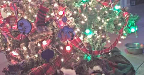 This Cat-Owner Found The Most Beautiful Surprise Beneath Her Christmas Tree