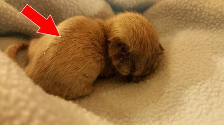 They Found This Abandoned Kitten But After Looking Closer, Something Didn't Seem Right...