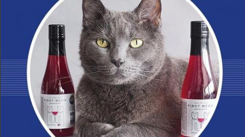 In Colorado, People Are Sharing Their Wine With Their Cats