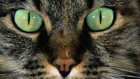 Study Reveals Astonishing Reason Why Cats Have Vertical Pupils!