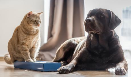 Tricks You Can Use To Make Your Cat And Dog Get Along