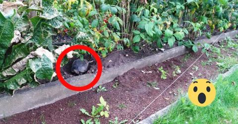 Police Officers Were Left In Outrage When They Discovered What Was Hidden In The Dirt