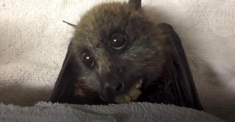This Video Will Change Everything You Think You Know About Bats