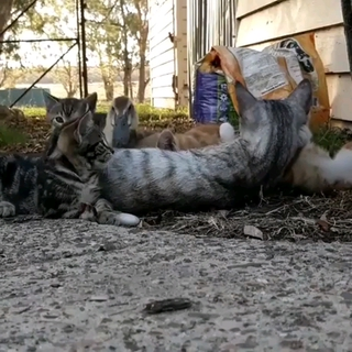 This Duckling Joining And Cuddling A Bunch Of Kittens Will Brighten Up Your Day