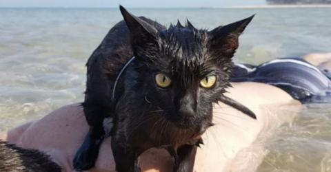 Happy Rescue Cat Goes For A Swim On The Beach For The First Time