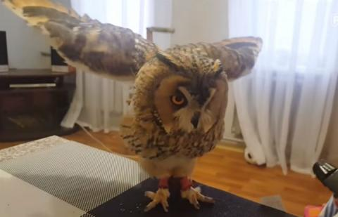 Well-Behaved Curbie The Owl Taking A Bath Proves How Adorable Owls Can Be