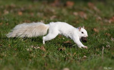 Moment A Super Rare 'Albino' Squirrel Is Spotted In UK City Centre - And It's Adorable