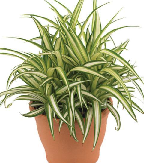 φυτα,φυτα για φραχτη,φυτα που φερνουν γρουσουζια,φυτα εσωτερικου χωρου,φυτα εσωτερικου χωρου τιμεσ,φυτα εξωτερικου χωρου,φυτα εσωτερικου χωρου ικεα,φυτα για μπαλκονι,φυτα εσωτερικου χωρου που δεν θελουν φωσ