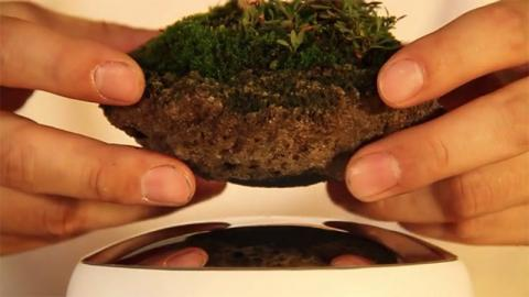 A Magical Floating Bonsai Tree Could Be In Your Home