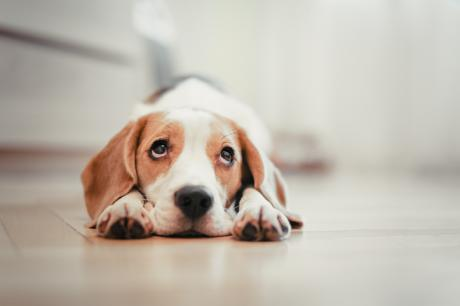 It's A Scientific Fact, Dogs Have A Technique For Breaking Our Hearts