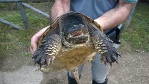 School Teacher Under Fire After Using Turtle In Class Experiment