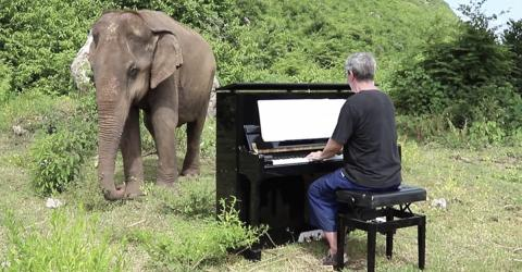 When He Starts Playing The Piano For A Blind Elephant In Thailand Something Truly Beautiful Happens