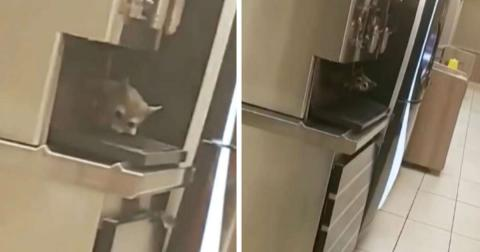 Burger King Customer Left Puzzled By Creature He Spots At The Fast-Food Chain