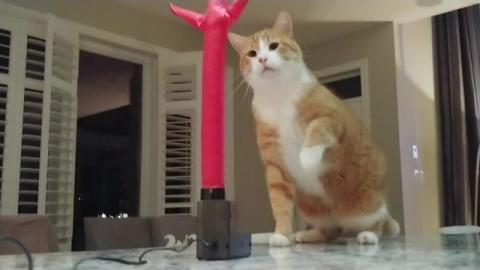 The Hilarious Moment A Curious Cat Meets An Inflatable Tube Man For The First Time