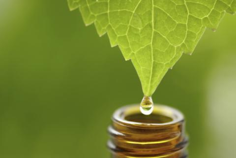 Start Using Hemp Oil On Your Skin And Hair And You'll Never look Back
