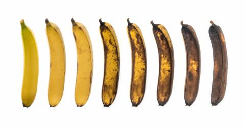Most People Will Get This Wrong But Which Of These Bananas Is Best For Your Health?