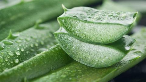 Aloe Vera: The Benefits For Your Face And Skin