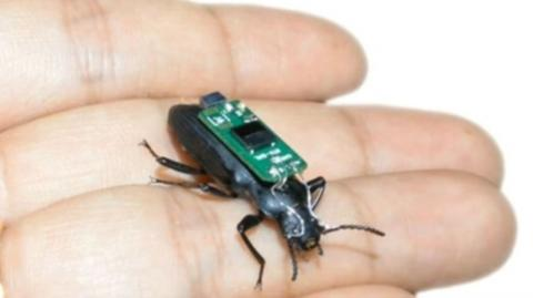 This Tiny Beetle Could Soon Become The Key To Saving Thousands Of Lives