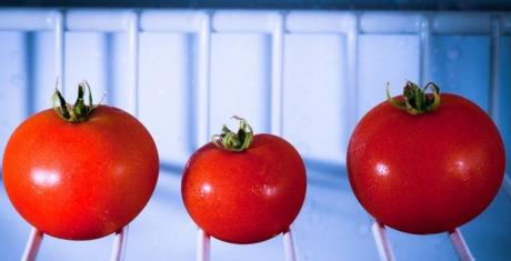 This Is The Real Reason You Should Never Put Your Tomatoes In The Fridge